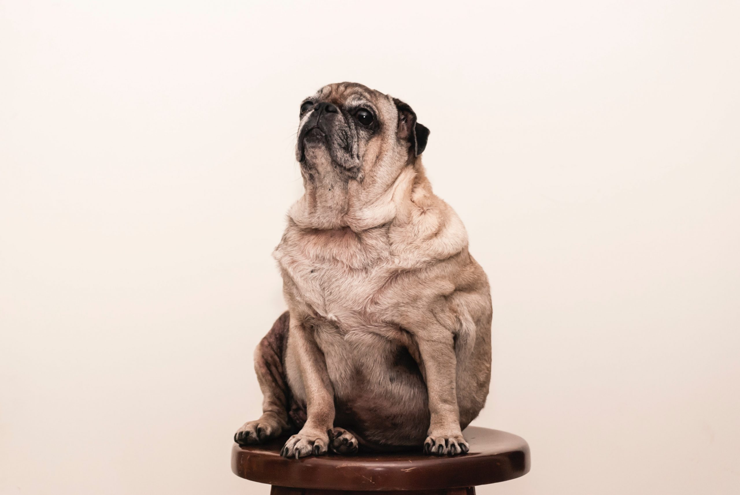 Weight Loss Programs For Dogs