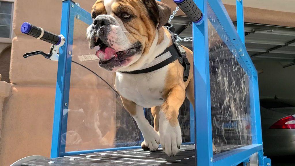 Las Vegas Mobile Dog Gym